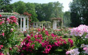 Roses parc de la tête d'or